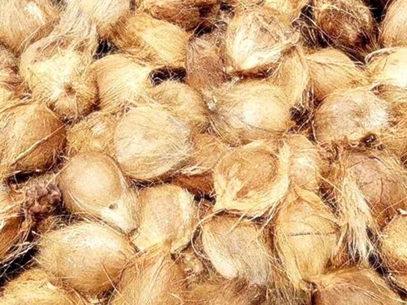 2. Dehusked Coconuts